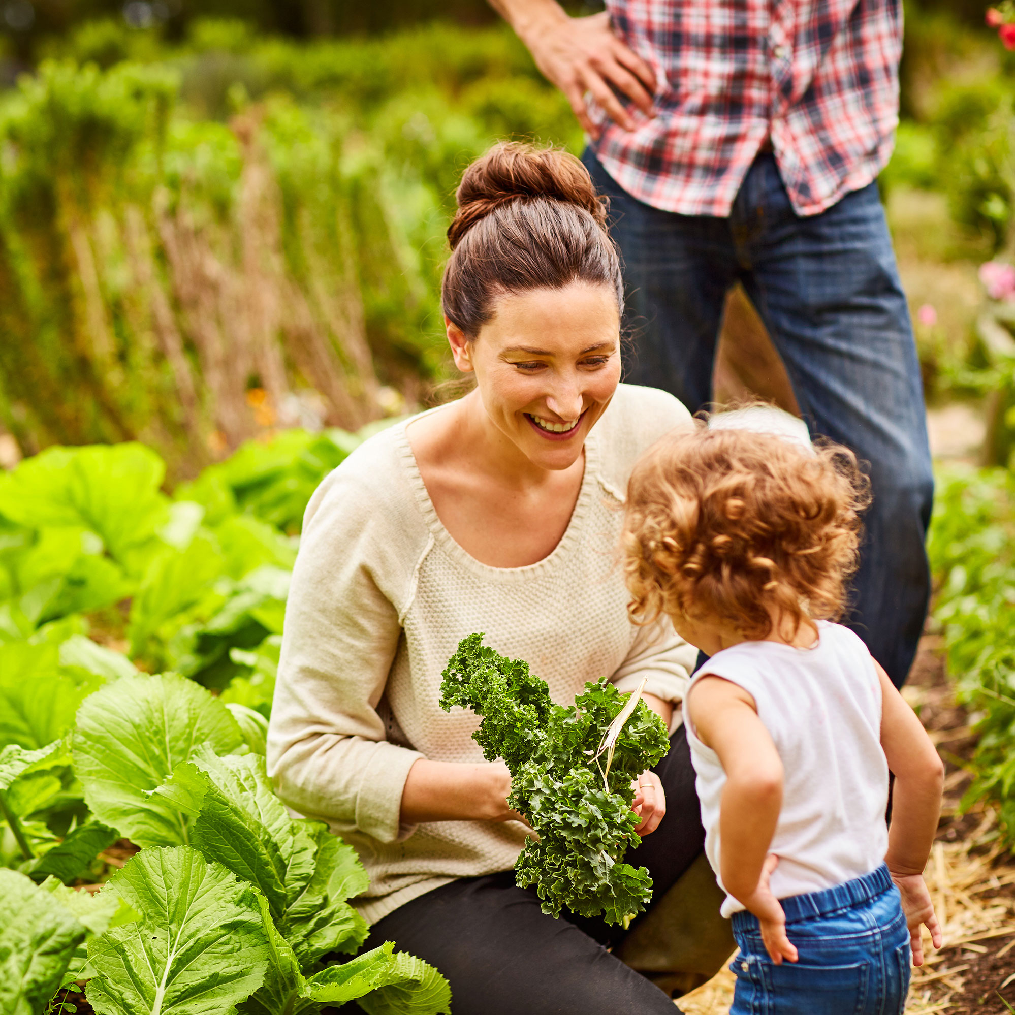 Family picking salad in the garden.